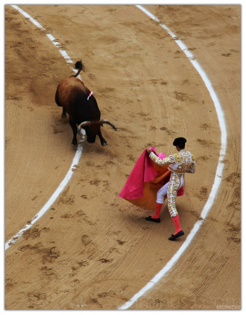 BULL-FIGHTING (4)