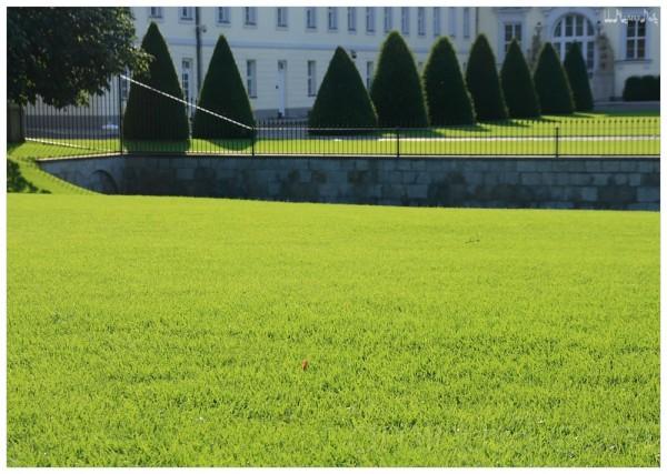 grass of BERLIN