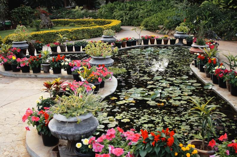 Pond, flowers & greenery