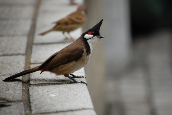 Bird (I)