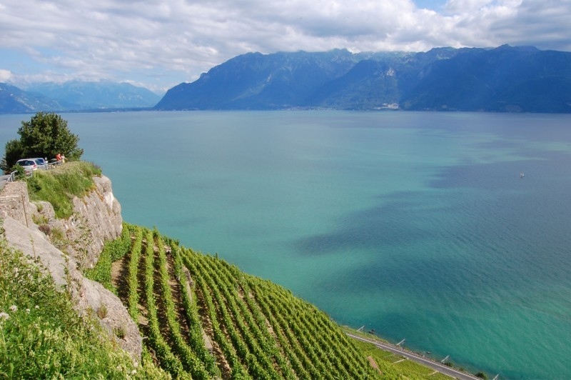 View from the Lavaux's vines (III)