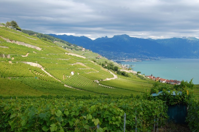 View from the Lavaux's vines (V)