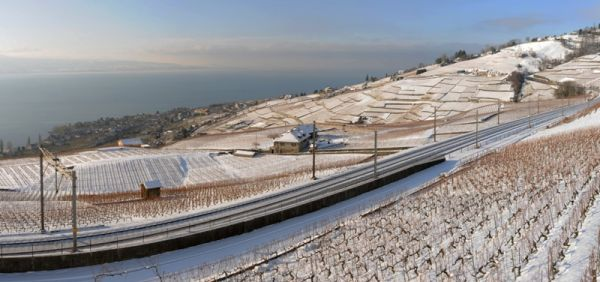 Lavaux in Winter