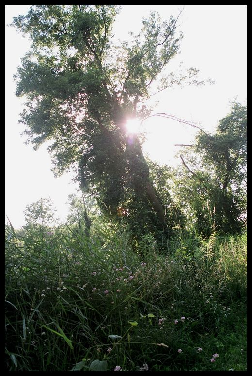 light shining through an old tree