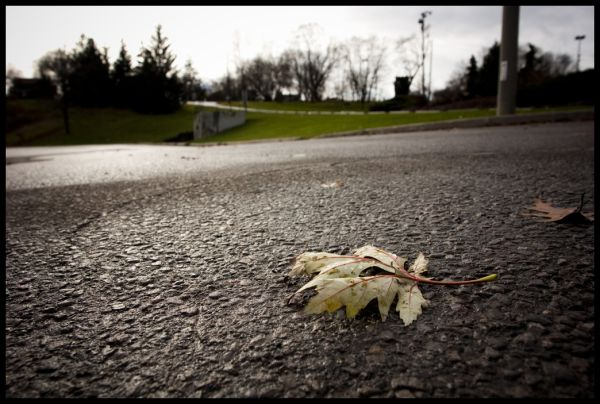 leaf in the lot