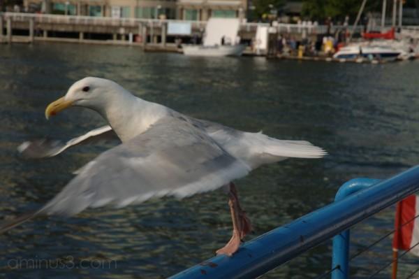 bird instant of flight takeoff
