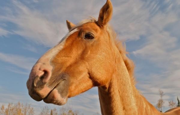 Meet Jim the Horse