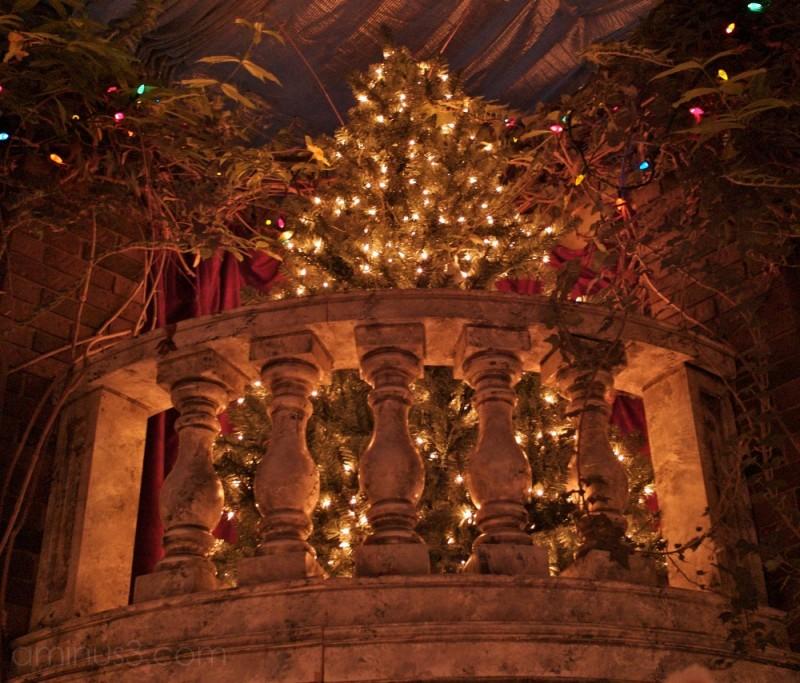 christmas trees, lights and decorations winnipeg c