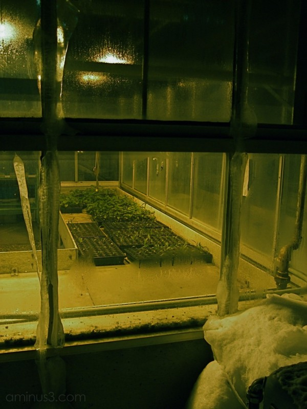 greenhouse winter university of manitoba, canada
