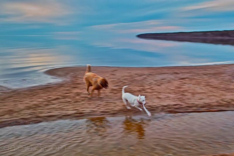 dogs at lake lester beach lake winnipeg manitoba