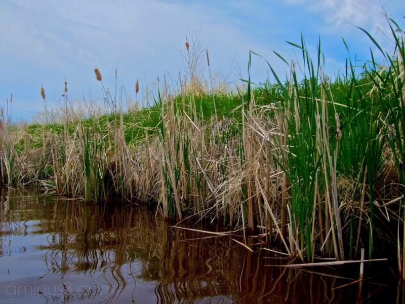 lake winnipeg wetlands near gimli