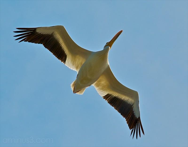 pelican lake winnipeg manitoba canada