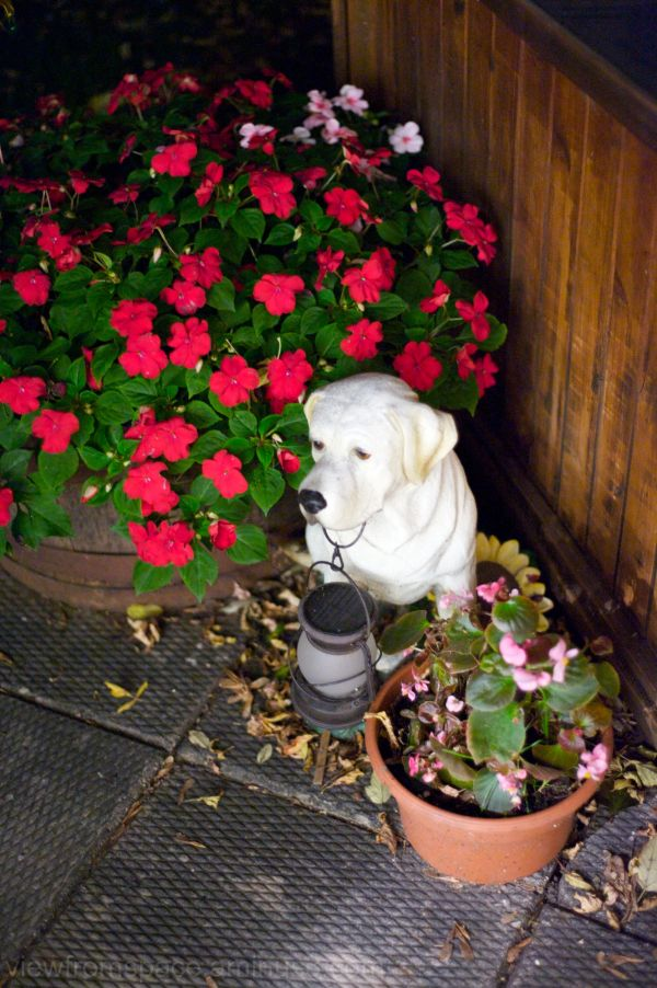 flowers dog patio crap
