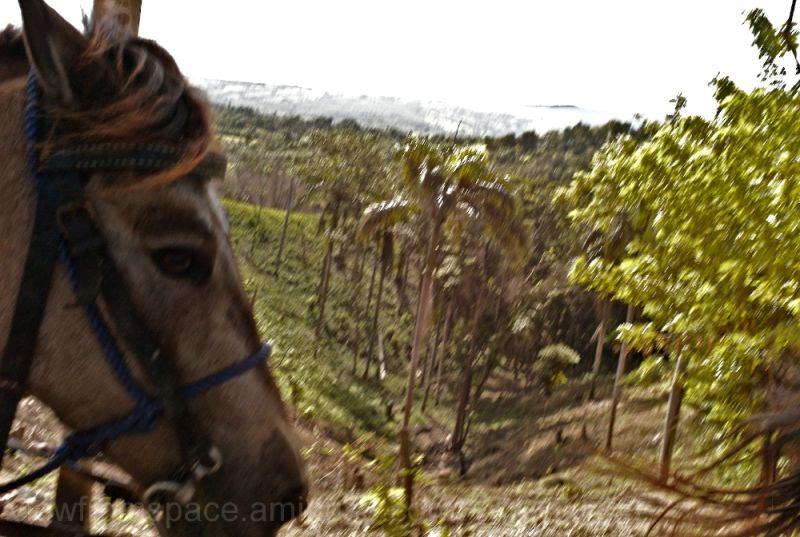horse mountains dominican republic