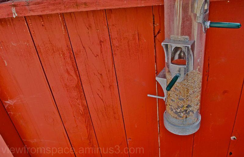 bird feeder winnipeg canada