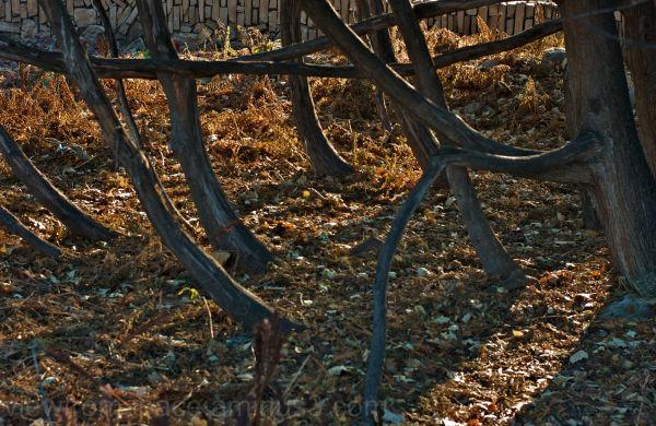 wood trees biomass etc
