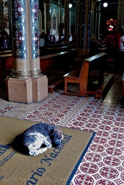 cortado costa rica church dog