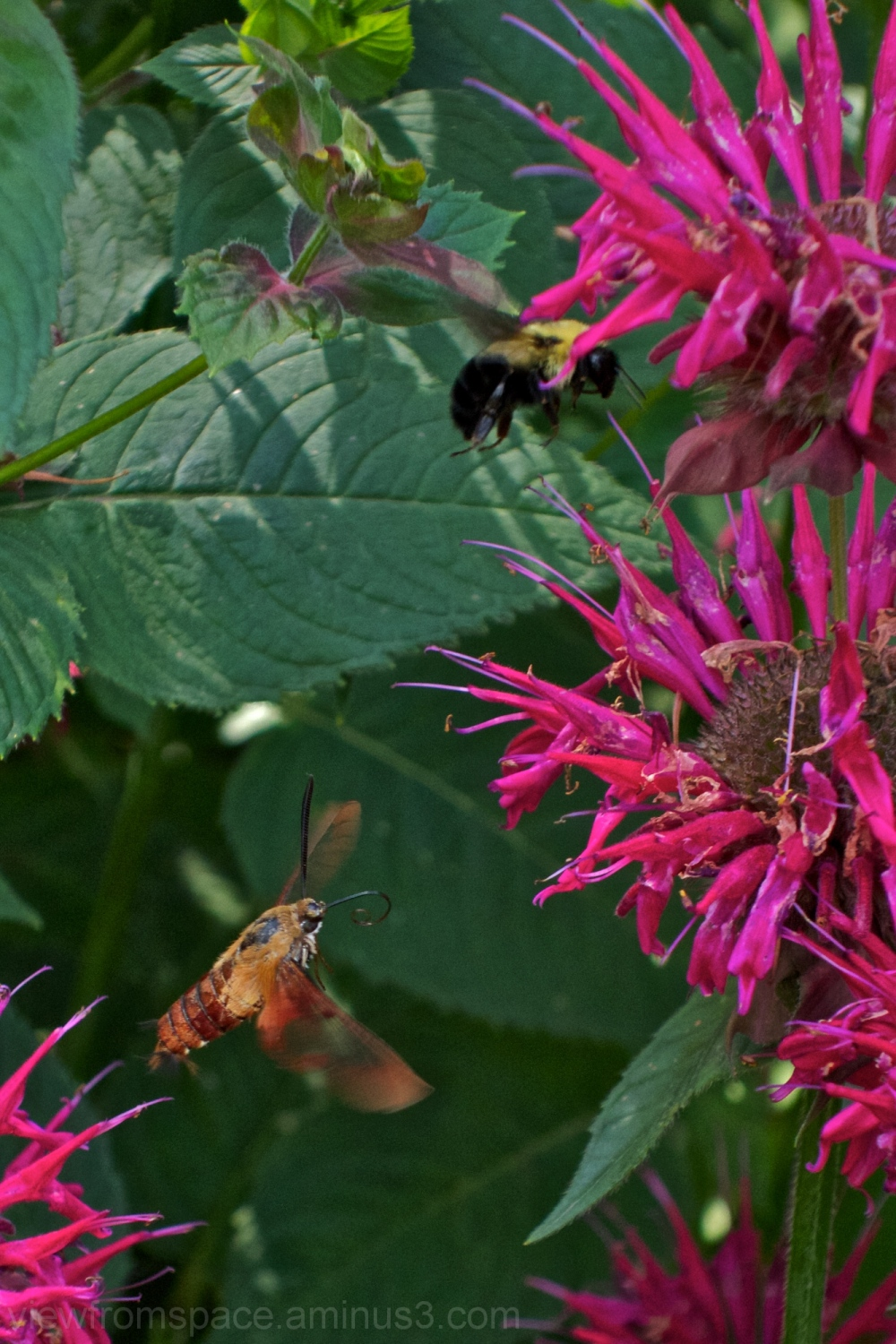 winnipeg flowers insects canada summer