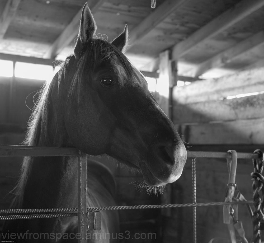 morris stampede horse stables