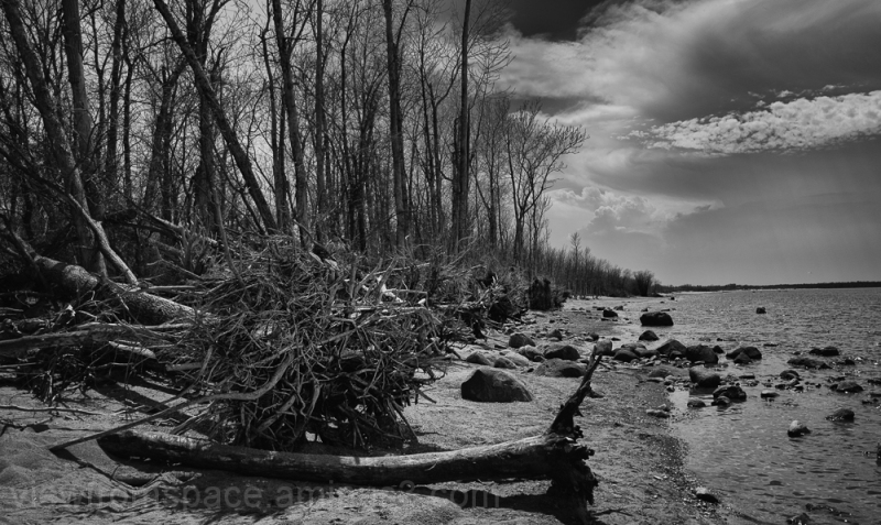 lake winnipeg east shore toppled trees mono canada