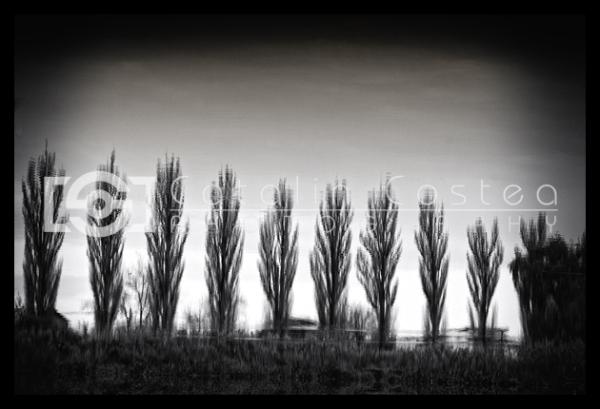 Copaci in lac