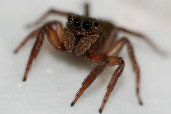 macro spider stare
