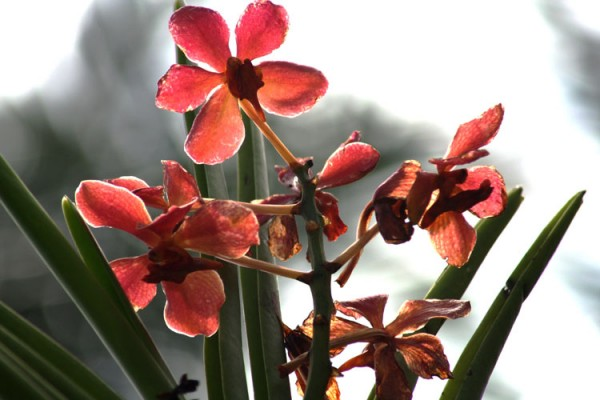 orchids glowing