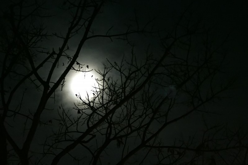 branches silhouetted with moonlight