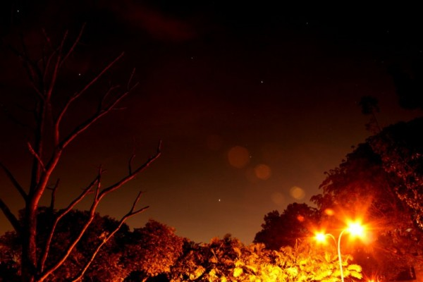 stars with lampost and tree branches