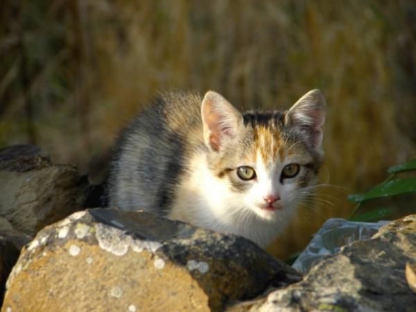Hola minino! | Hello Kittie!