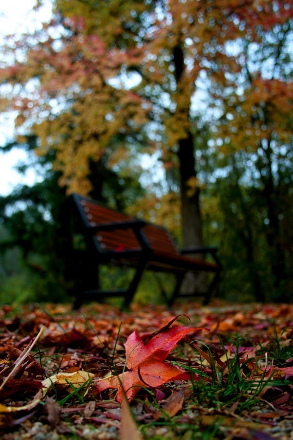 bench leaves