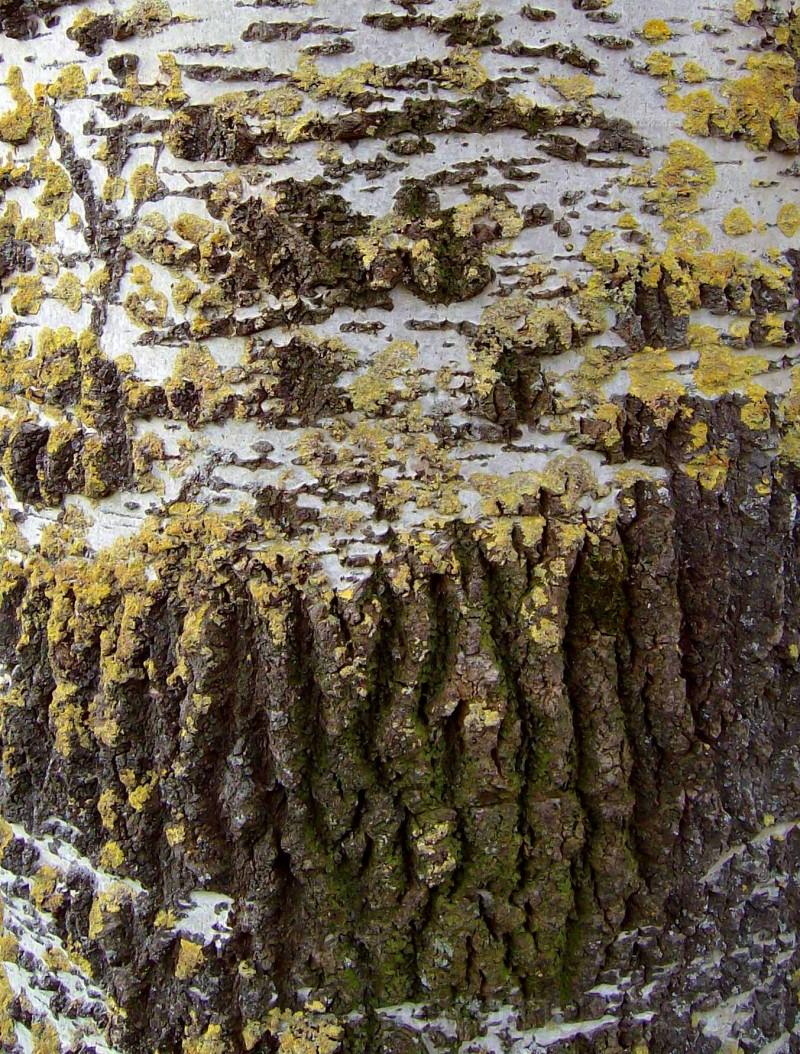 bark landscape