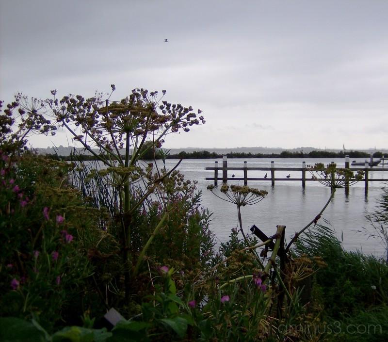the Heeger Meer