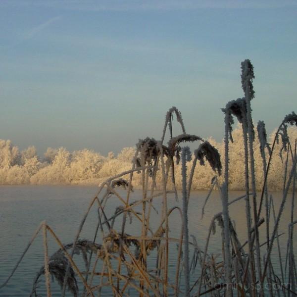 Tytsjerksteradiel #1: Frozen Reeds