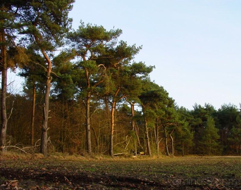 De Kempen #3: Forest Border