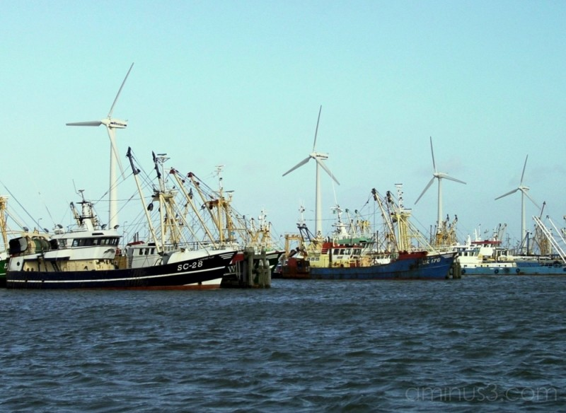 Lauwersmeer: harbour with windmills