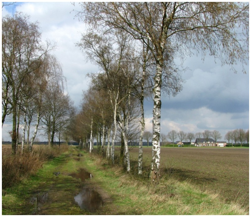 Landscape near Eersel (N.B.)