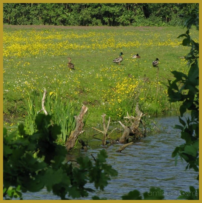 Ducks by Willem Maris