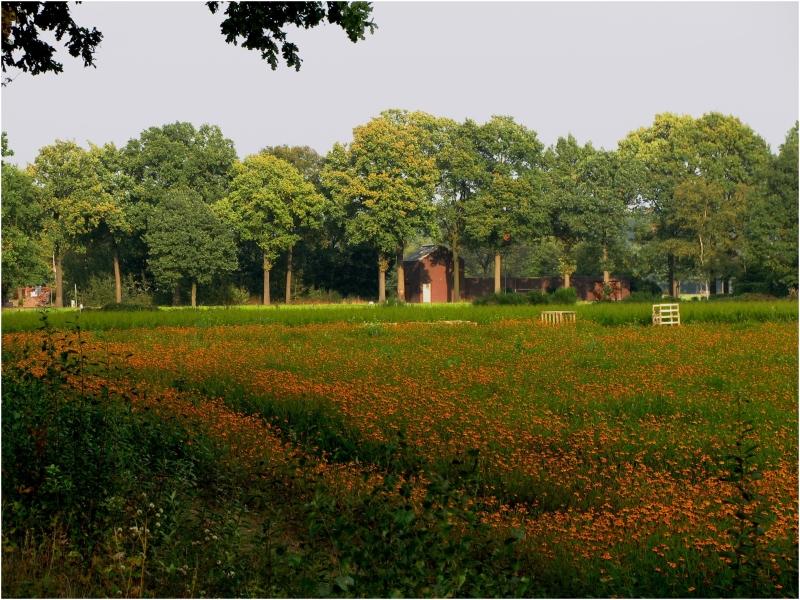 Orange flowers in landscape