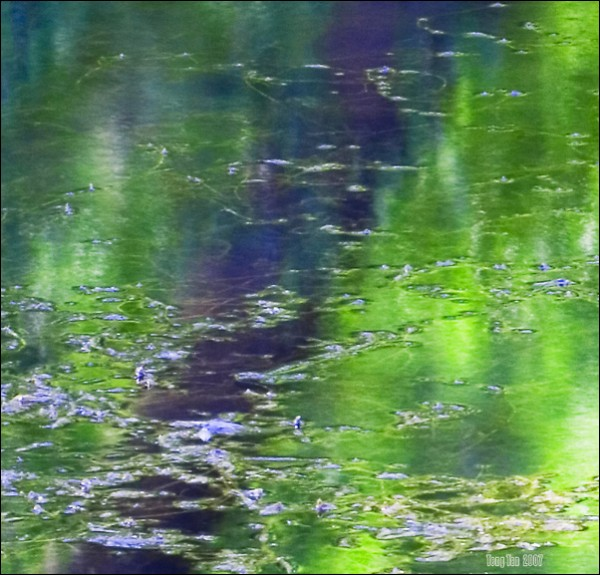 Abstract reflection of tree in stagnant water