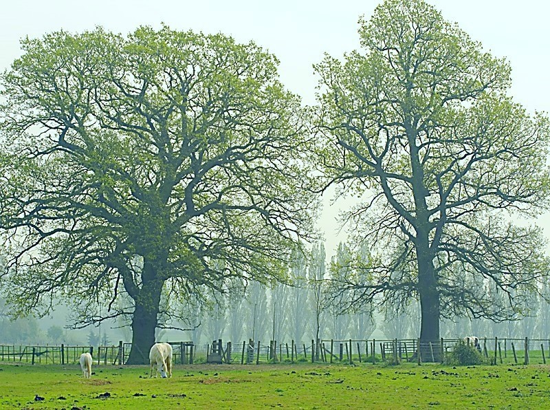English Pastoral Scene