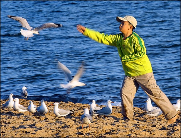 Boy Feeding Seagulls