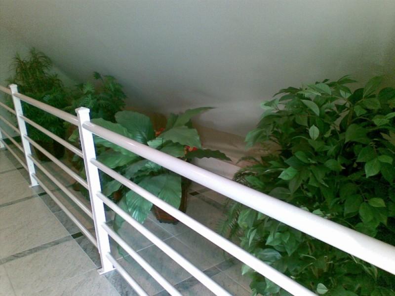 Fake plants at Cedar Park Inn, Edmonton