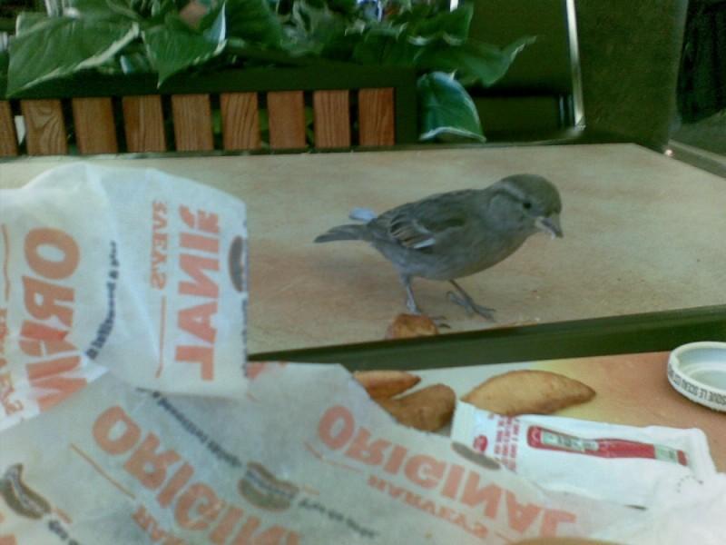 Bird eating my food @ YWG