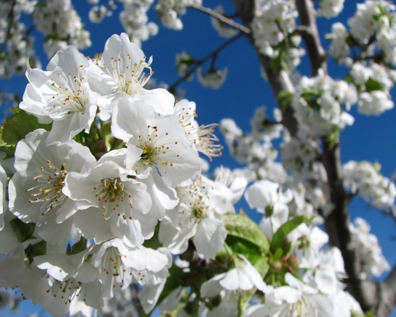 Spring In Iran