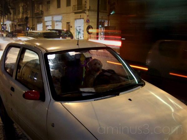 Cani al volante