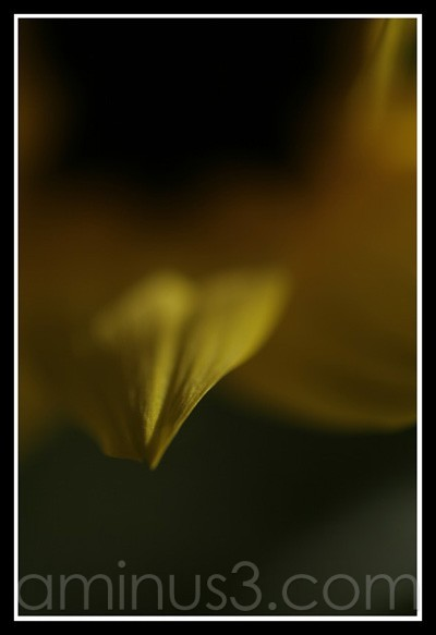 30d yellow leaf canon