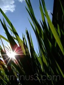 grass,green,sun,sunshine,