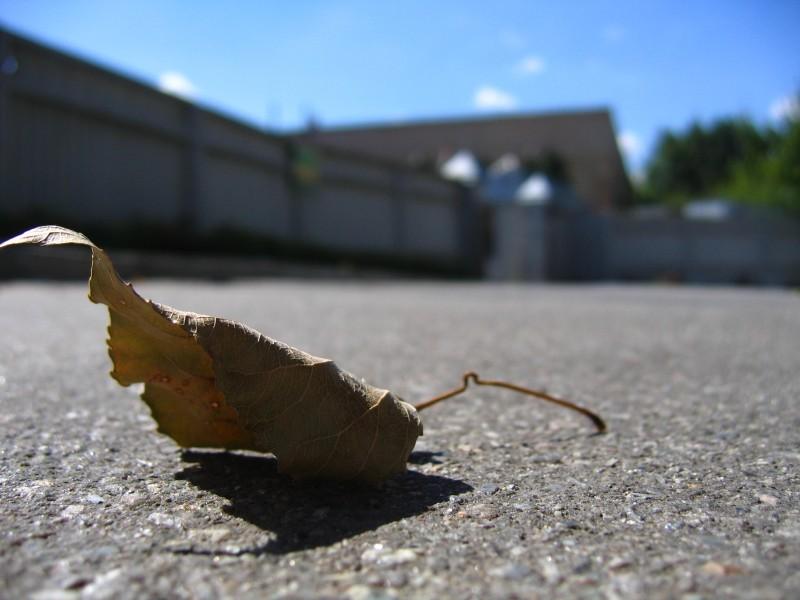 leaf trunk