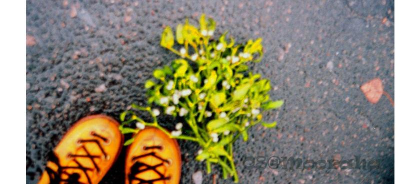 yellow shoes misletoe svyatogorsk